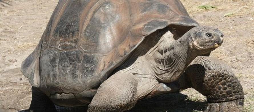Napad kornjača na Njujorški aerodrom