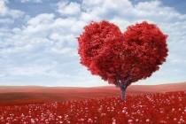 Sve što niste znali o srcu