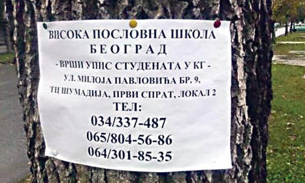 Oglas na jednom drvetu. Foto: 24 sata