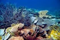 Okeani su naša odgovornost