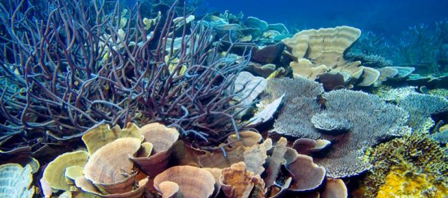 Otkrivene nove vrste životinja u dubokim vodama Kosta Rike!