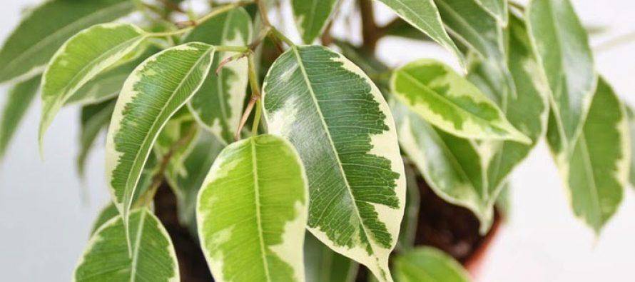 Sobne biljke – punjači baterija