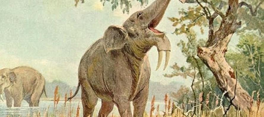 Pronađen fosil slona star 7 miliona godina