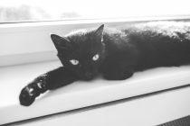 Crne mačke – vesnici nesreće