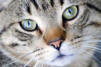 Čudne mačje oči