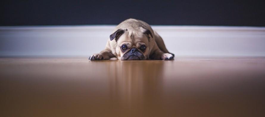 Zašto je dobro imati psa?