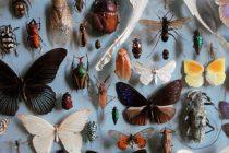 Poklon univerzitetu – više od milion insekata!