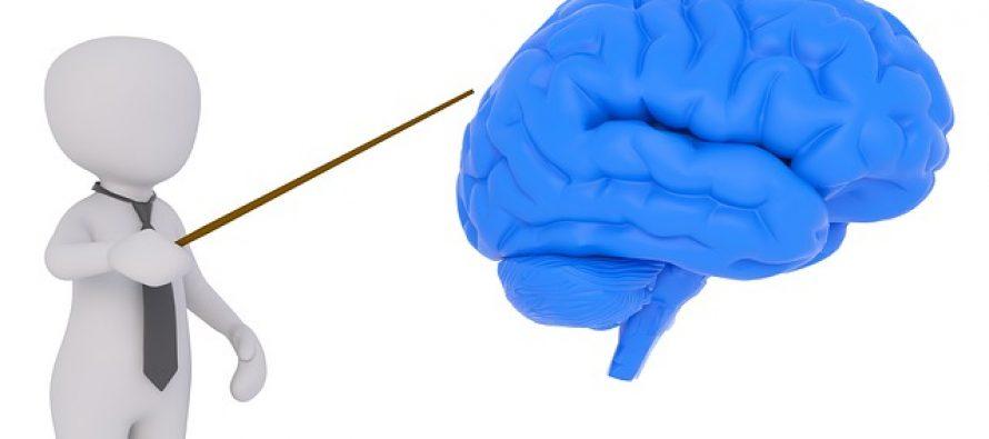 Koristimo li samo 10 odsto mozga?