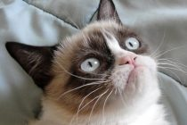 """Popularna mačka """"Grumpy cat"""" donela vlasnicima više od pola miliona dolara!"""