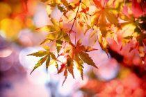 Jesen je savršeno doba za nove početke?